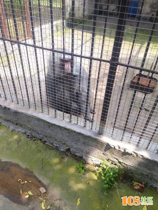 温岭动物园可怜的动物们