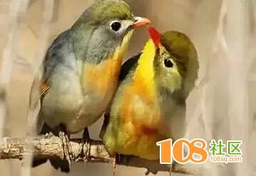 你算什么鸟?别误会,可没骂你,因为……