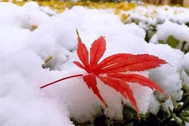 今日大雪丨做好三件事,保你春天不生病!