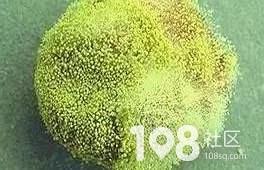 【提醒】它的毒性是砒霜的68倍,开水煮不死!平湖家家户户都可能有…