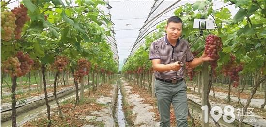 嘉兴平湖41岁果农直播两小时卖水果 粉丝好几千成平湖网红