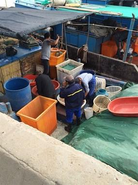 乍浦海边竟然涌出现这么多人,究竟是在搞什么大动作?