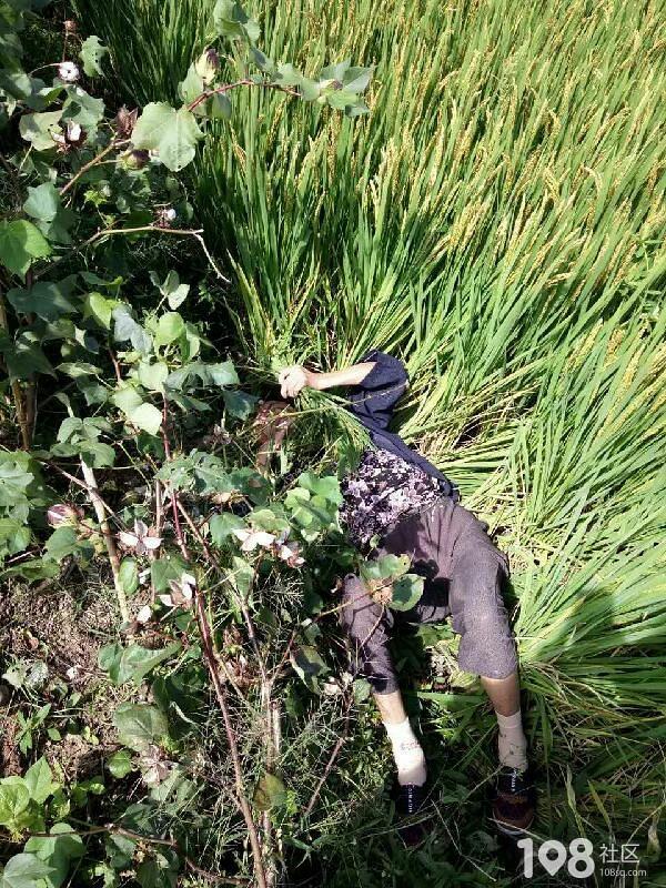 新埭路旁草丛惊现两条人腿?谁家的老人摔倒起不来了