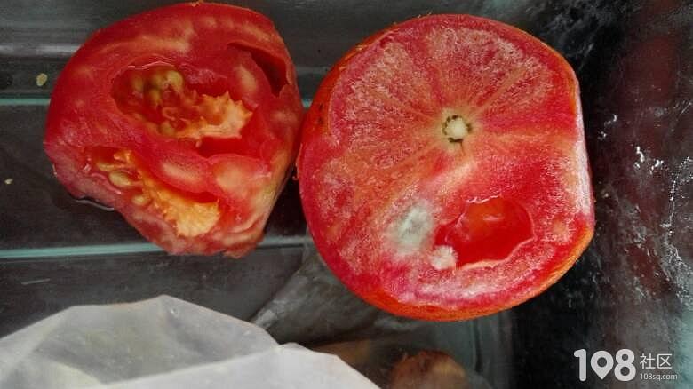每天一打开冰箱就是这些,菜都霉成这样还逼着孩子吃!