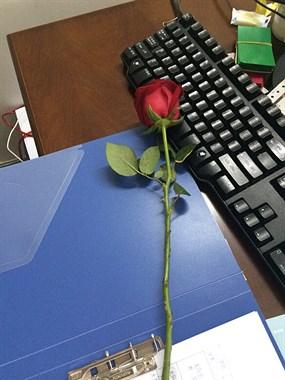 艳遇!莫名其妙桌上多了朵玫瑰,这是哪家的社友送的啊