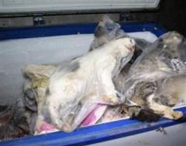恐怖!新登一女子将爱犬尸体放进了自家冰箱,原来是…