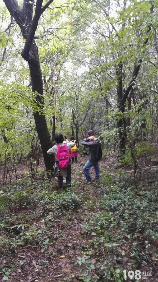 正能量!平湖环保小组开展清山护鸟公益行,6小时多解救野鸟