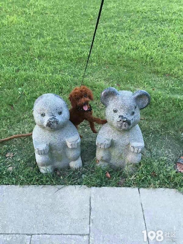 寻狗启事:大润发银河电影院丢失小狗,如有消息请留言