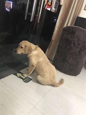 家中爱犬被一迷彩裤男子诱拐往大洲方向逃遄,家母伤心欲绝!