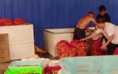 现场曝光!景德镇这伙人竟用有害药水浸泡冬枣 整整1万多斤