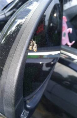 大白天竟然在我车上玩车震,一看停车场看到这一幕就无语了!