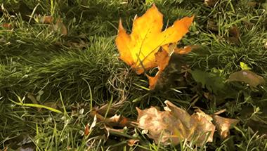 【每日随手拍】秋天是适合拍照的季节