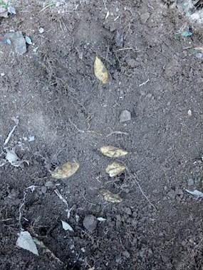 鲜嫩可口的冬笋来了,你想怎么吃?