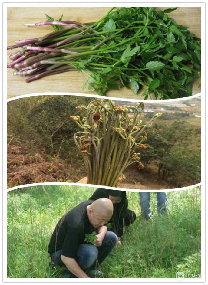 美丽荷塘|挖竹笋、捡鸡蛋、摘野菜,3月31号就等你啦!