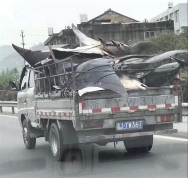 """小货车一连载了22条""""活化石""""上路 路人拍下照片后举报"""