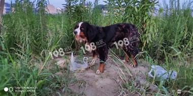 它在等主人吗?崧厦一狗狗待在这大半月了,刮风下雨都不肯走