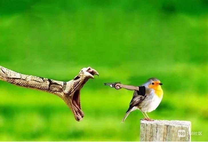 鸟长胳膊了???