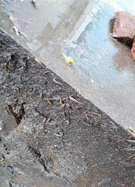 院里惊现细长的螺,据说被咬了会肚子变大得怪病?邻居说是…