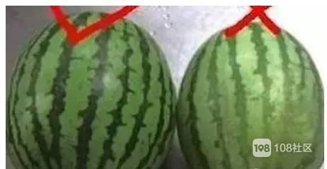 买了个西瓜回家切开一看,里面竟是这样的···