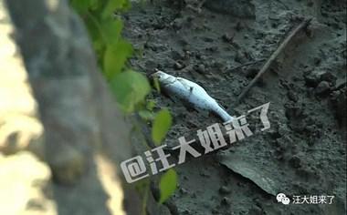 已拘留!有人在岱东饮用水源处下毒 现只能将河水排空…