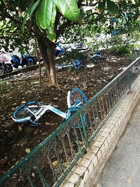 共享单车取用停放有序,是城市文明提现
