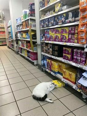 肥猫进超市偷猫粮就睡了,醒来脸很臭:什么时候伺候朕用膳!