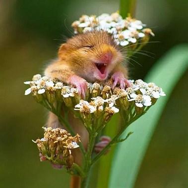 这些微笑的动物们,会让你也露出笑容