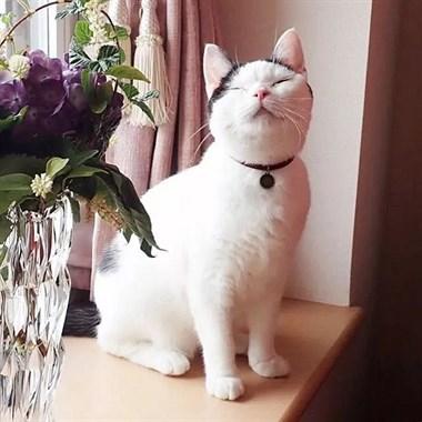 下辈子要活得像这只小猫咪一样,面朝大海,春暖花开!