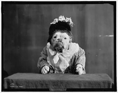 没想到一百多年前的狗,是这样的!