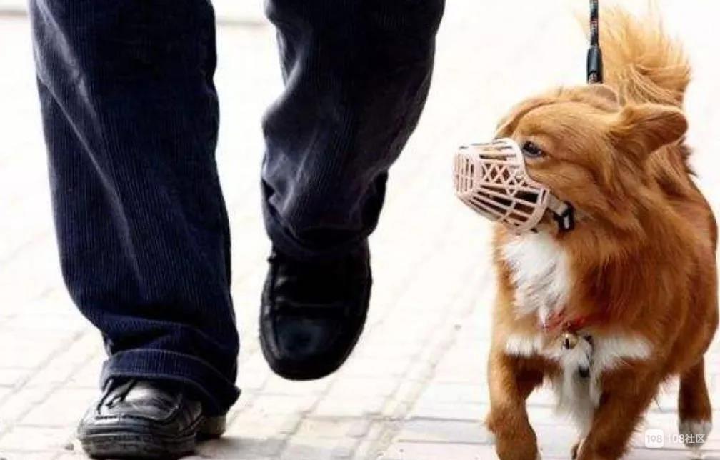 @所有南平人,新规出台!小区内遛狗必须…还有停车费归谁?