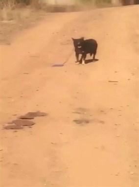 拖车司机被一只小狗拦住了车,原来它是在求救...