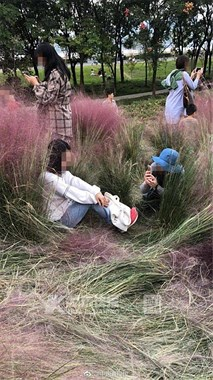 杭州也有网红草!3天就被踩得不像样,看花田阿姨嗓子都喊哑