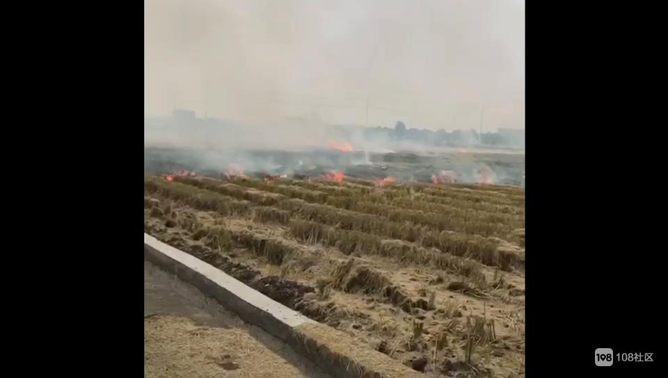 祝温村有人做这事,乌烟瘴气还以为着火了!社友拿手机拍下