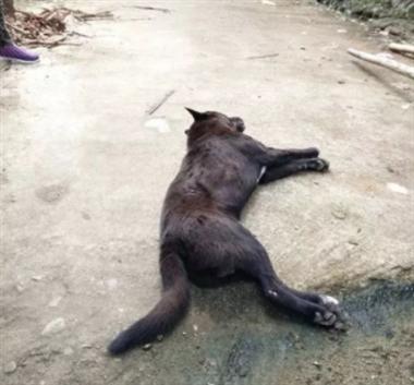 怎么劝老妈?她喂养的小狗被射杀,邻居又把狗拿去吃掉了…