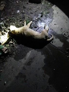 """太可恶了!这么小的狗狗也要毒死,现场找到了""""作案工具"""""""