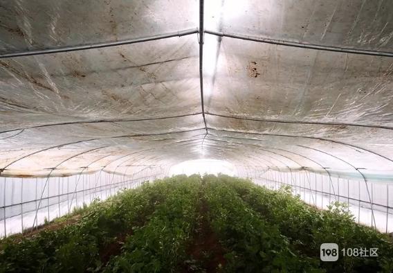 突发雪灾致农作物受损严重,上虞全力组织灾后生产自救