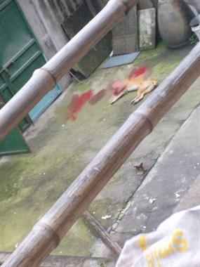 前村一男子光天化日把自己养的狗打死了!视频画面太残忍!