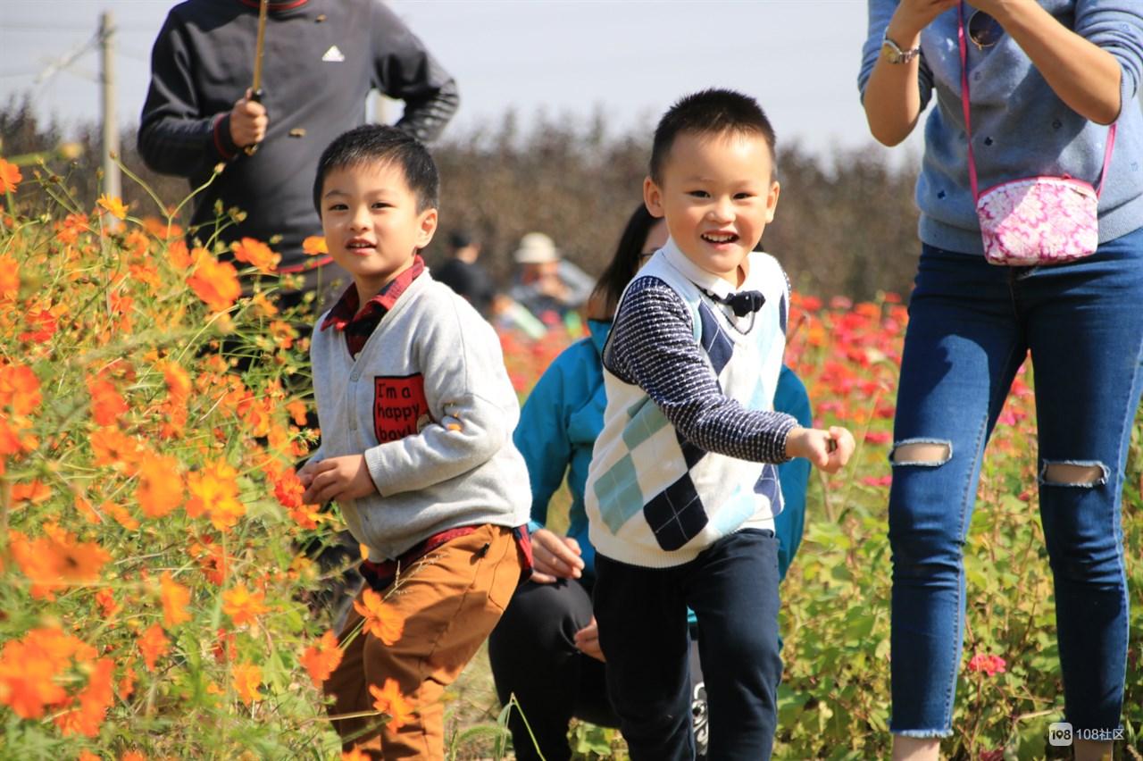 海宁乡村一日游,看花海、吃美食、摘橘子……
