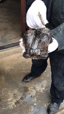 """湖州鱼塘惊现神奇""""怪龟"""" ,村民捞上来一看,竟长这模样…"""