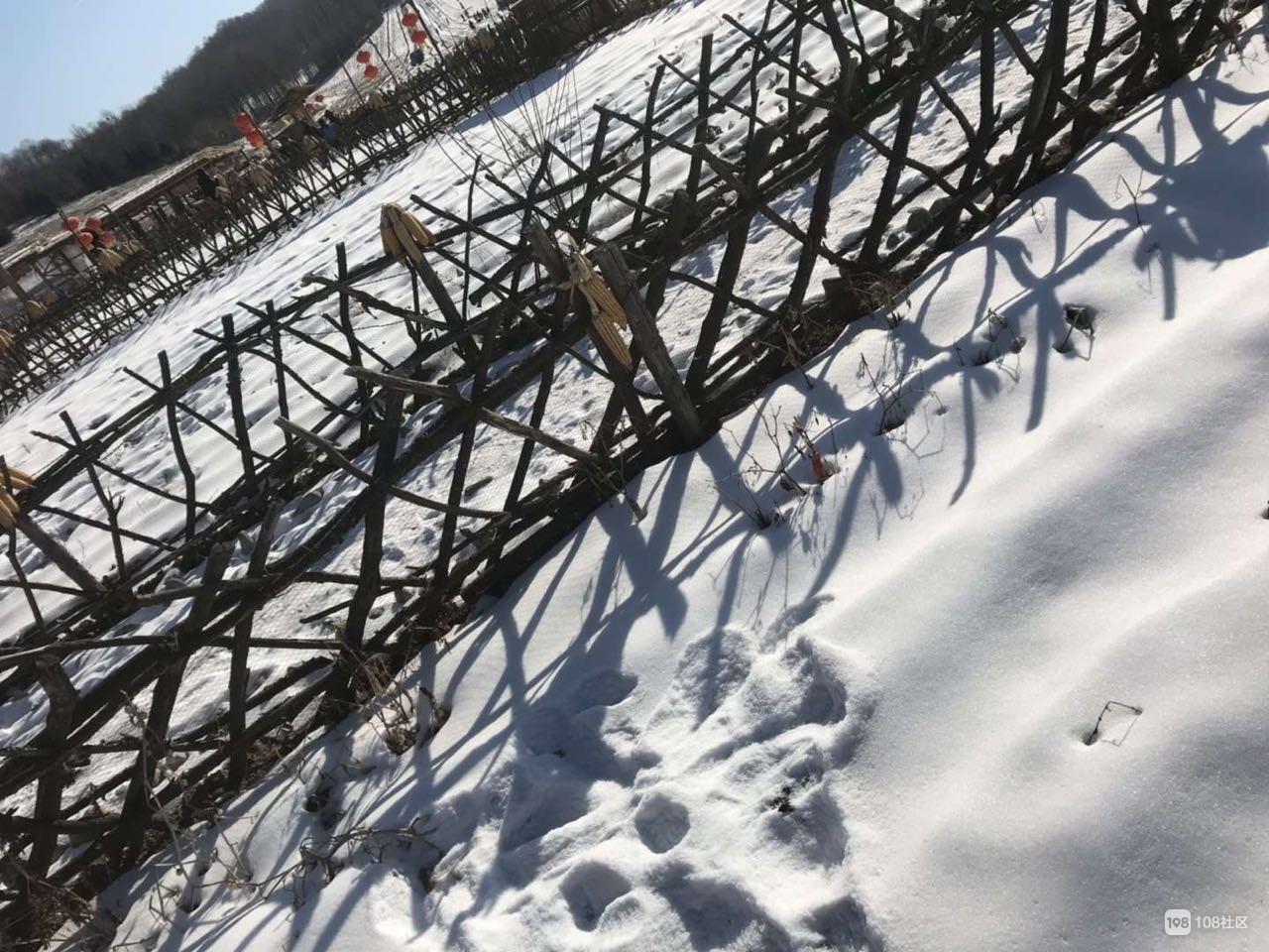 社友带你体验雪地摩托、雪人飞镖…还有实在的东北大通铺炕!
