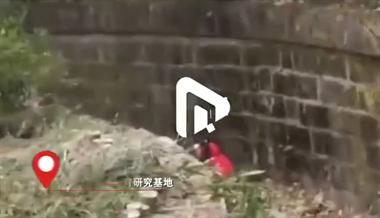 太险!小女孩不慎从围栏跌进圈舍,被几只大型