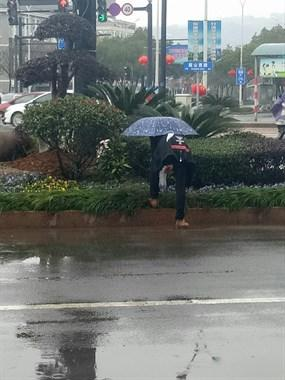 真缺德!一人冒着雨跑鼓山西路偷摘这些,一袋子都是