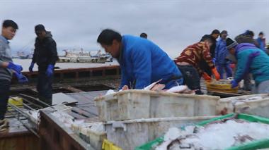 开工!年后第一批海鲜来了 价格略高于往年