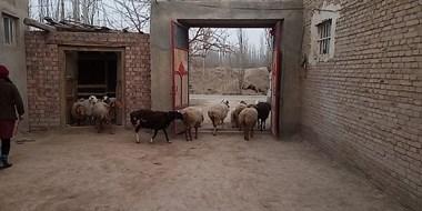 感动!去新疆走亲戚吃到一大桌菜,可女孩子也不能上桌吗?