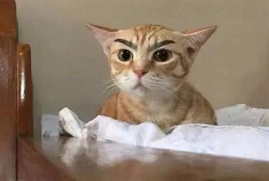 给猫做了个韩式半永久眉,没想到效果这么惊喜!