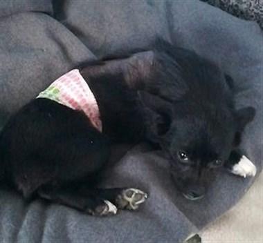 4个月小奶狗,被人用开水浇泼受伤!原因竟然是...