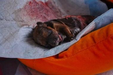 小狗刚出生就惨遭毒手,被救活后,变化惊人!