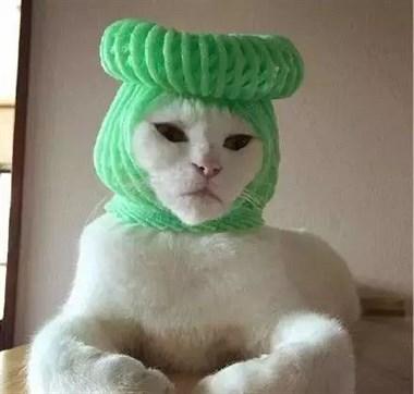 网友手制了一顶高帽,没想到猫戴上后效果竟然这么…