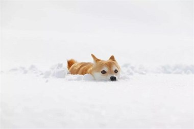 下雪天,最开心的除了南方人,还有狗子们!