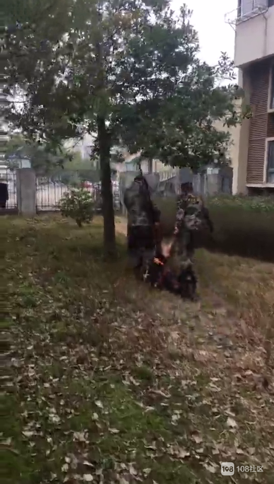 慌死了!野猪冲进湖州一居民小区!民警携枪赶往现场...